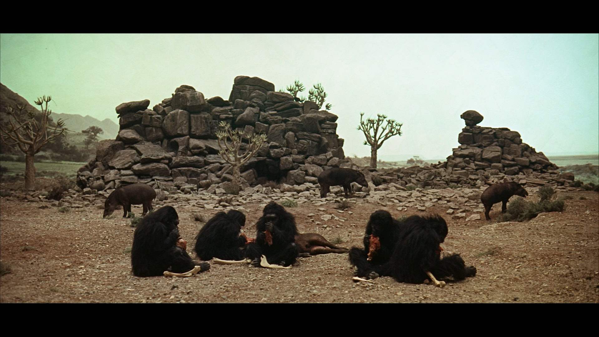 2001 Space Odyssey monkeys HD Wallpaper