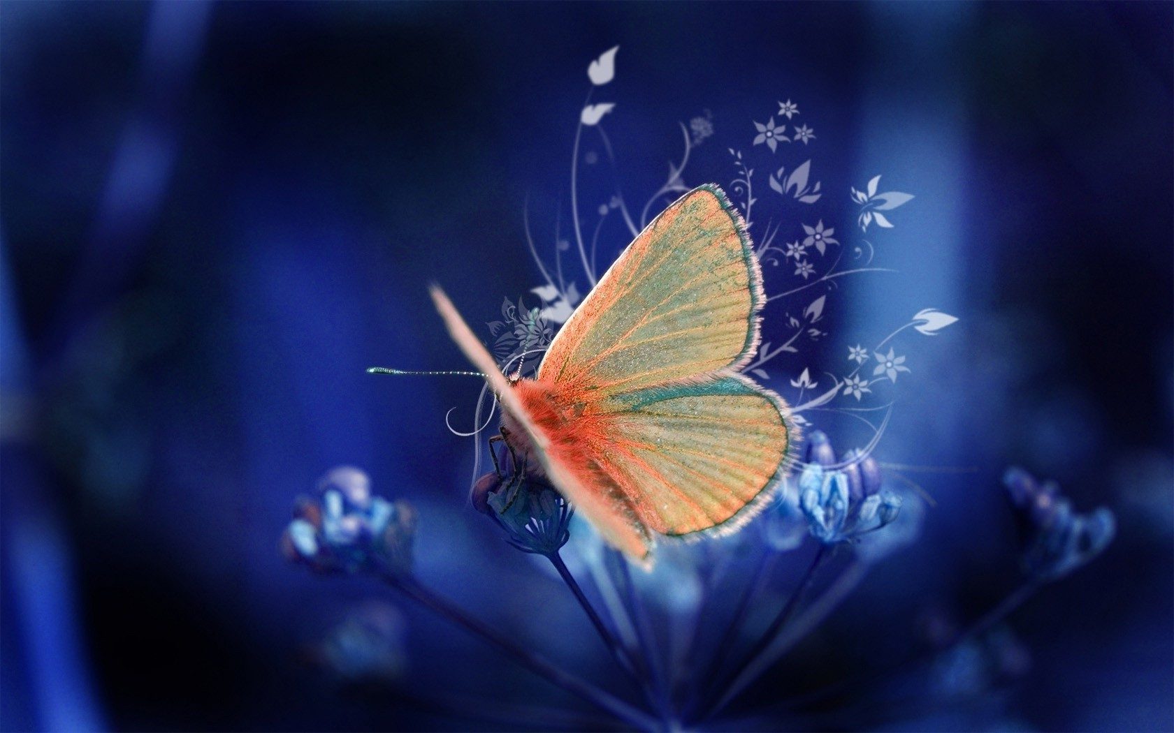 abstract artistic Butterflies HD Wallpaper