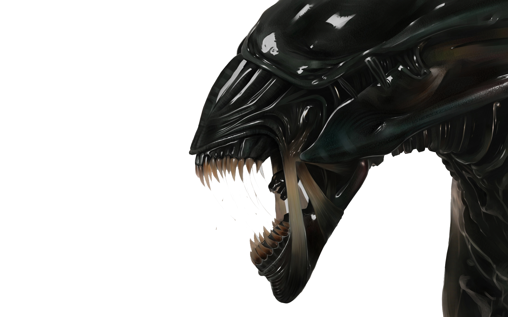 alien xenomorph Animals HD Wallpaper