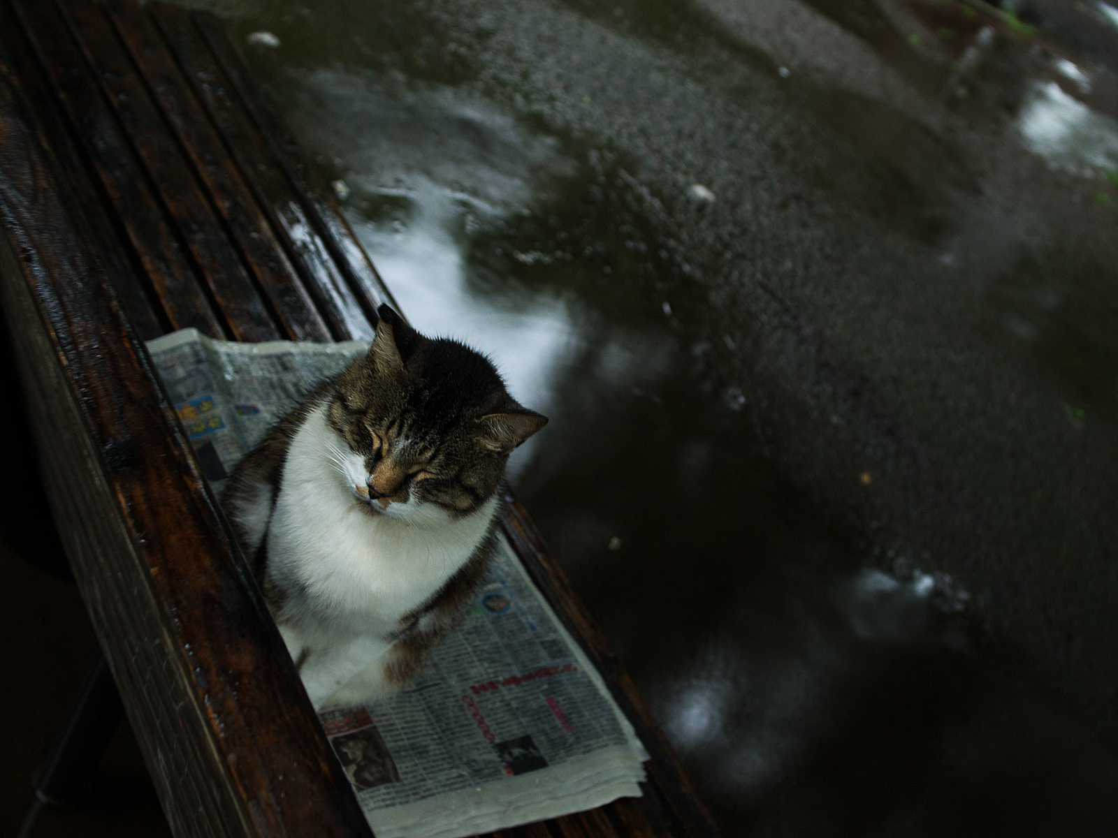 alone cat sitting bench HD Wallpaper