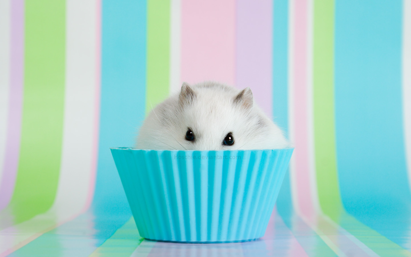 Animals cupcakes hamsters black