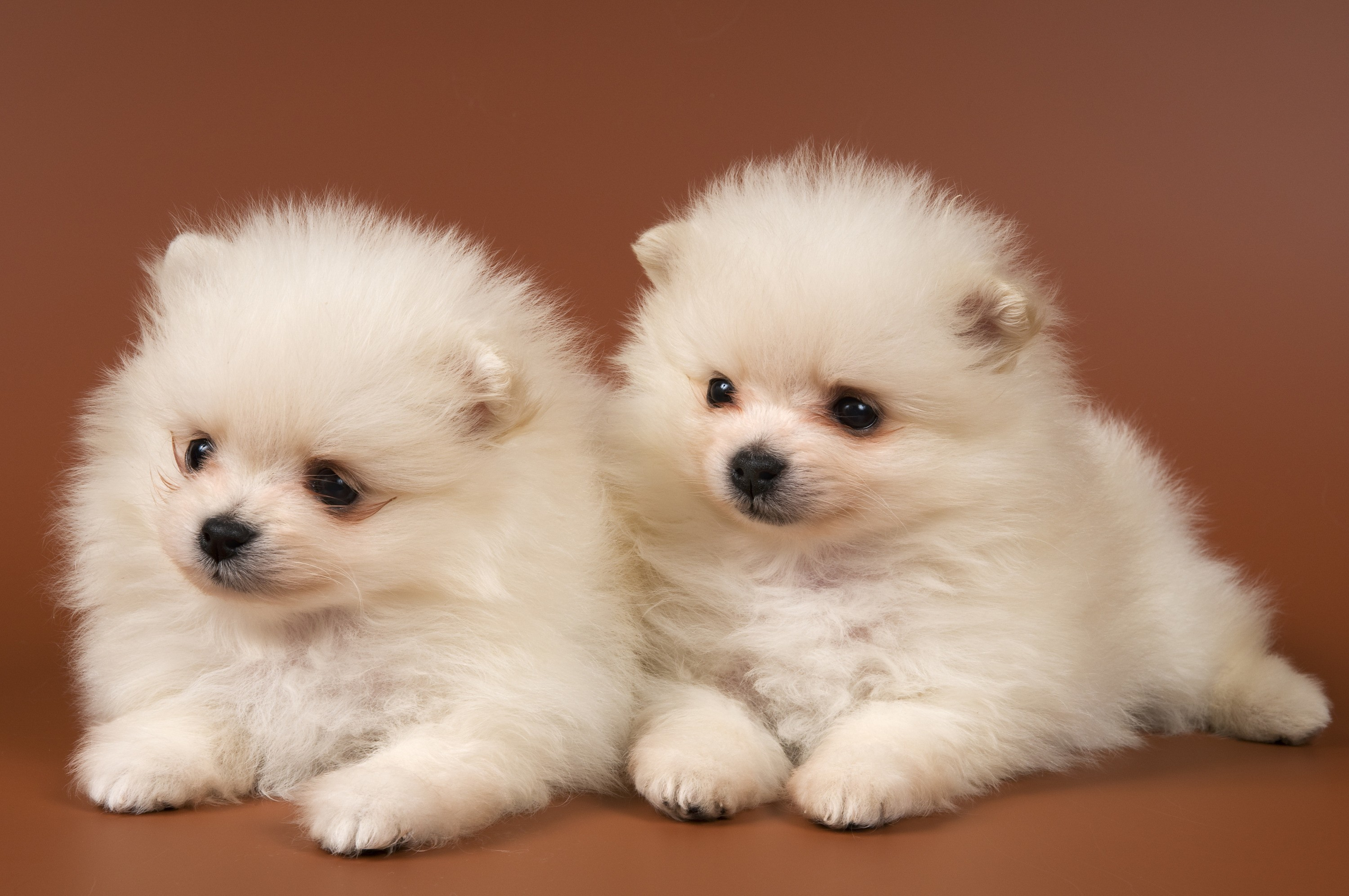 Animals Dogs Puppies HD Wallpaper