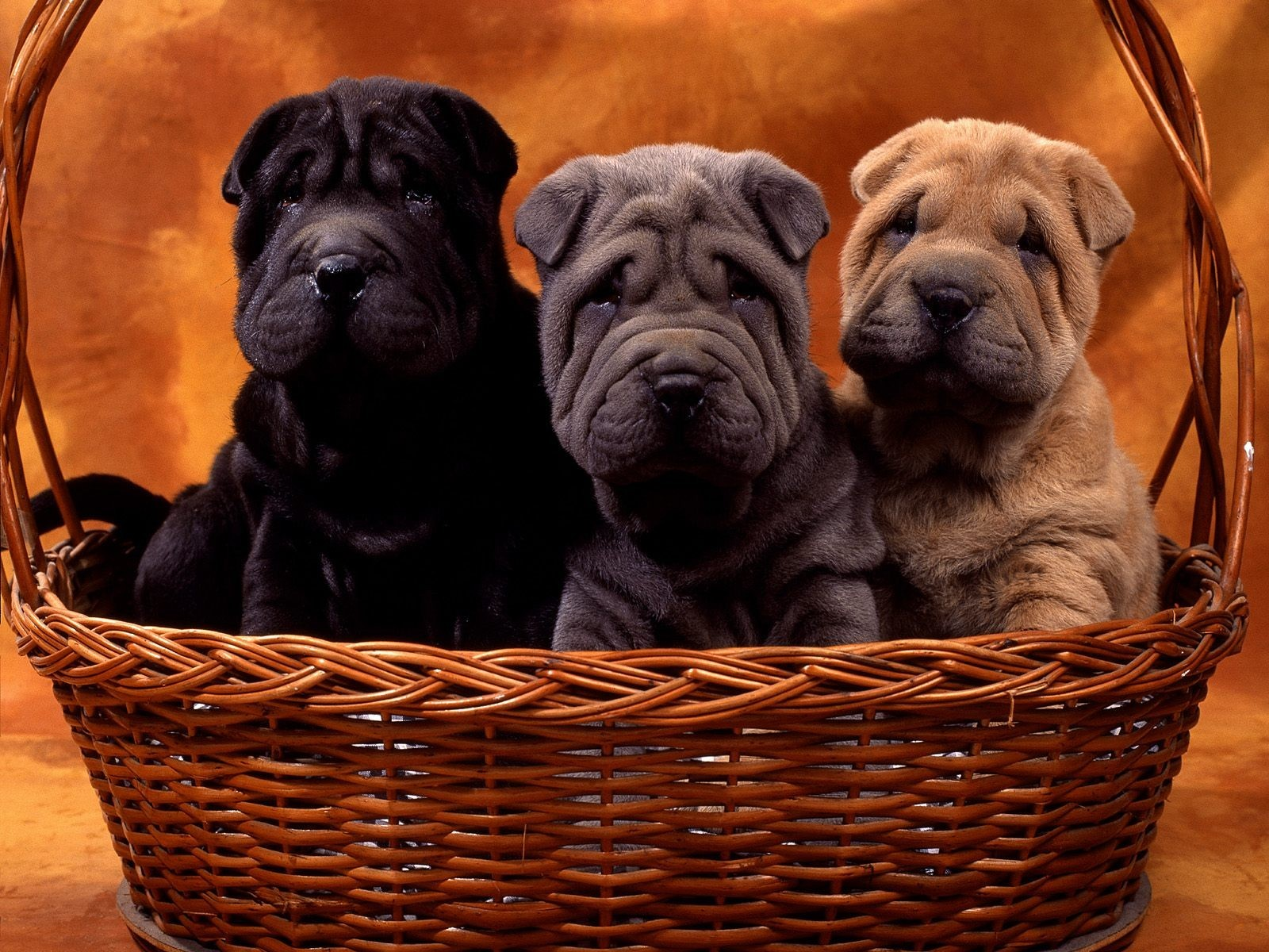 Animals Dogs Puppies baskets HD Wallpaper