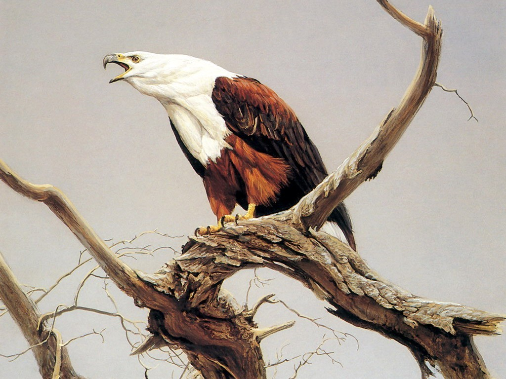 Animals Eagles branches HD Wallpaper