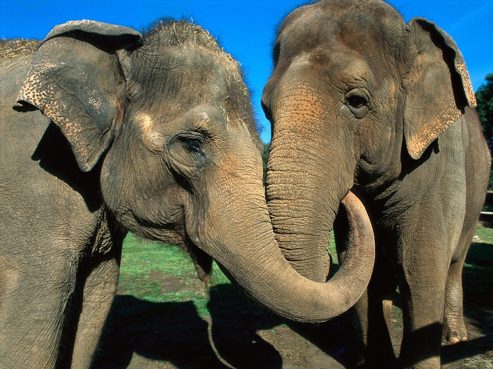 Animals elephants HD Wallpaper