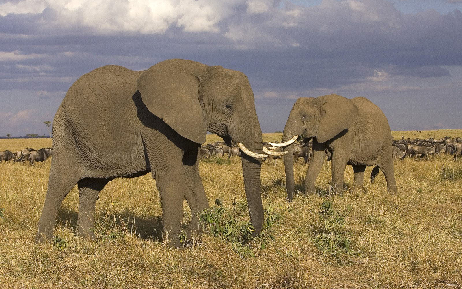 Animals elephants animal HD Wallpaper