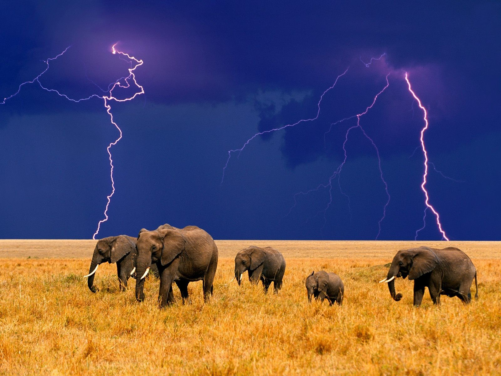 Animals elephants Lightning baby HD Wallpaper