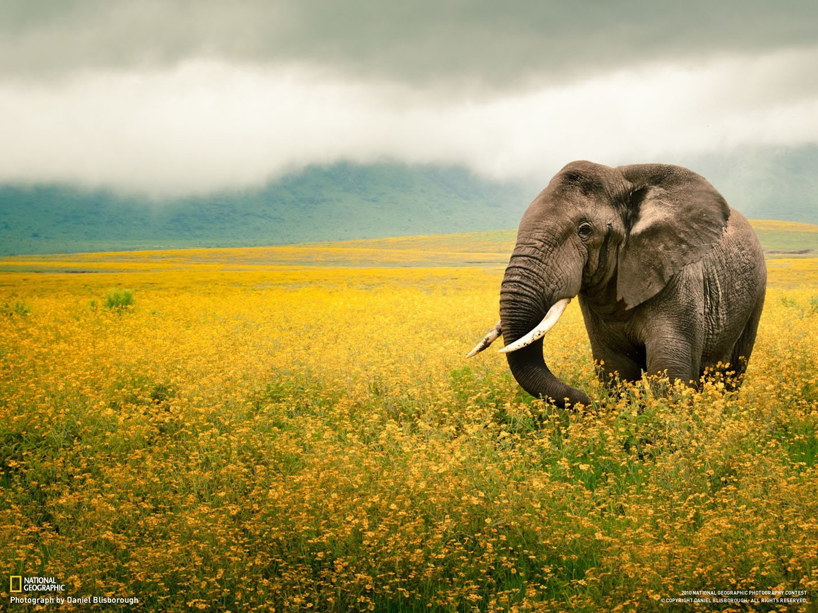 Animals fields national geographic HD Wallpaper