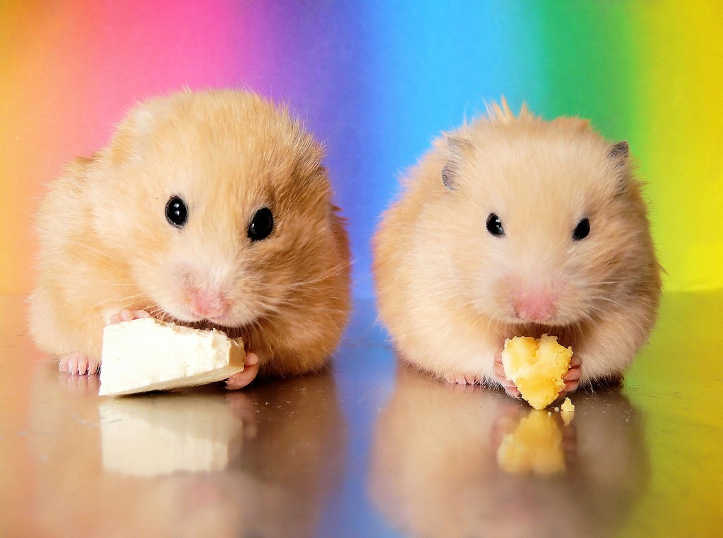 Animals food hamsters black