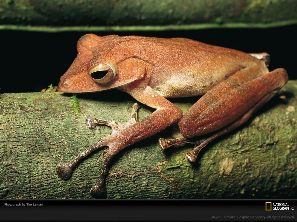 Animals Frogs amphibians tree HD Wallpaper