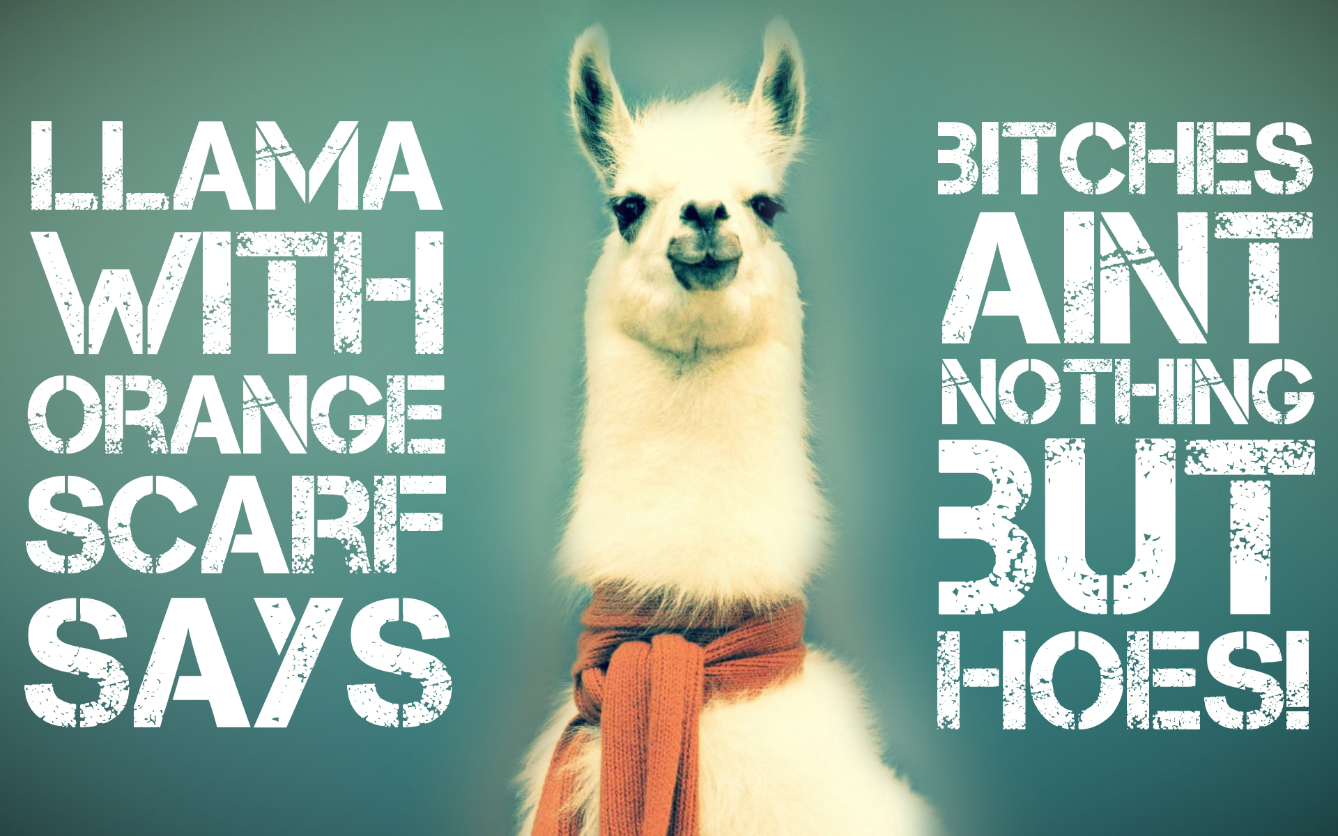 Animals funny llama HD Wallpaper