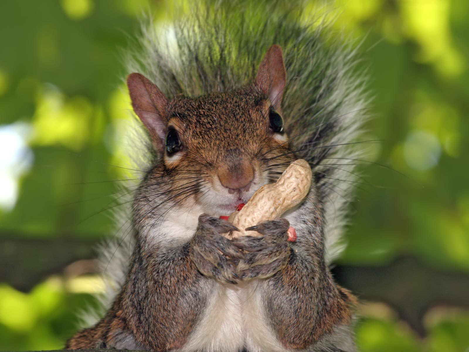 Animals funny squirrels animal HD Wallpaper