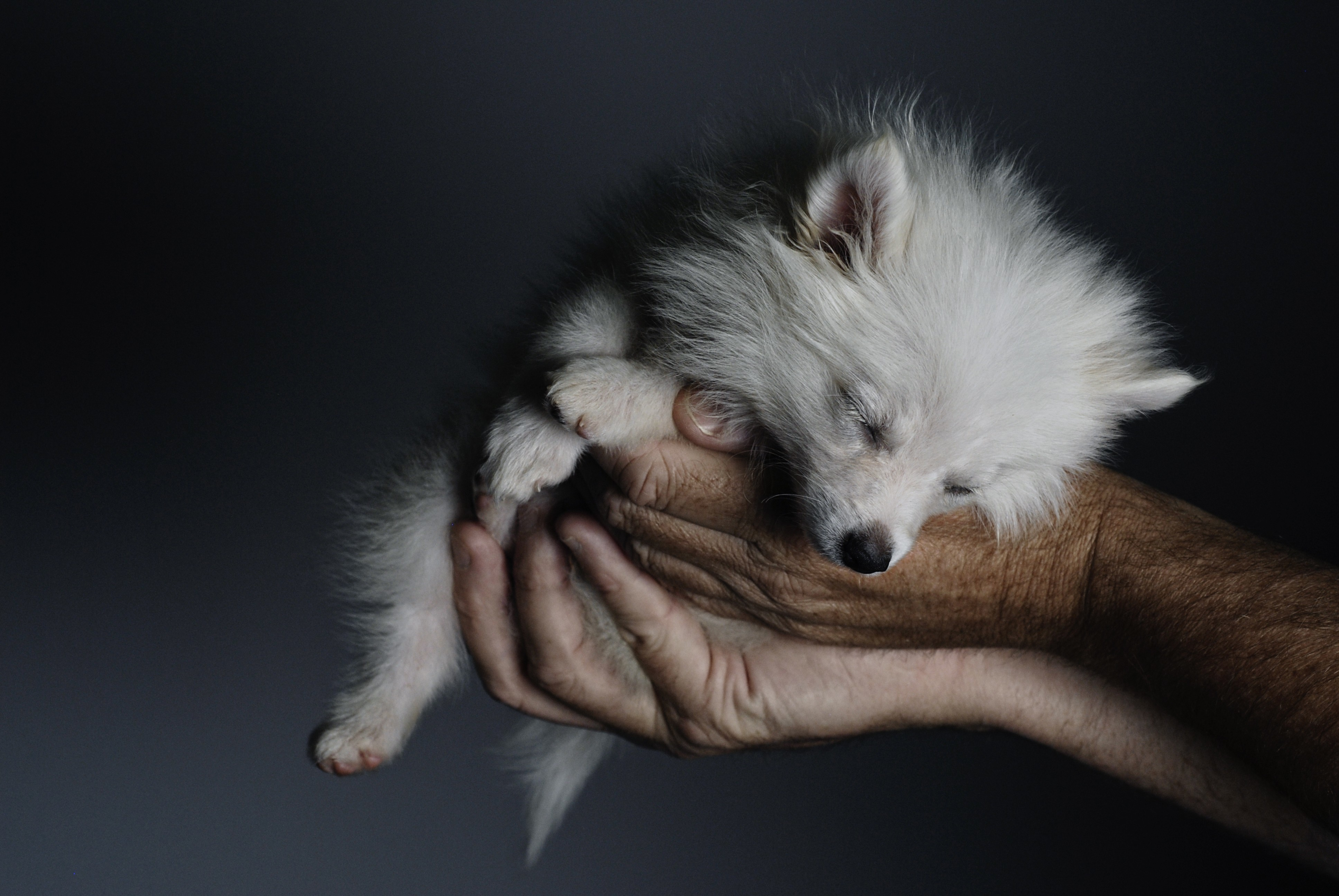 Animals hands Dogs Puppies