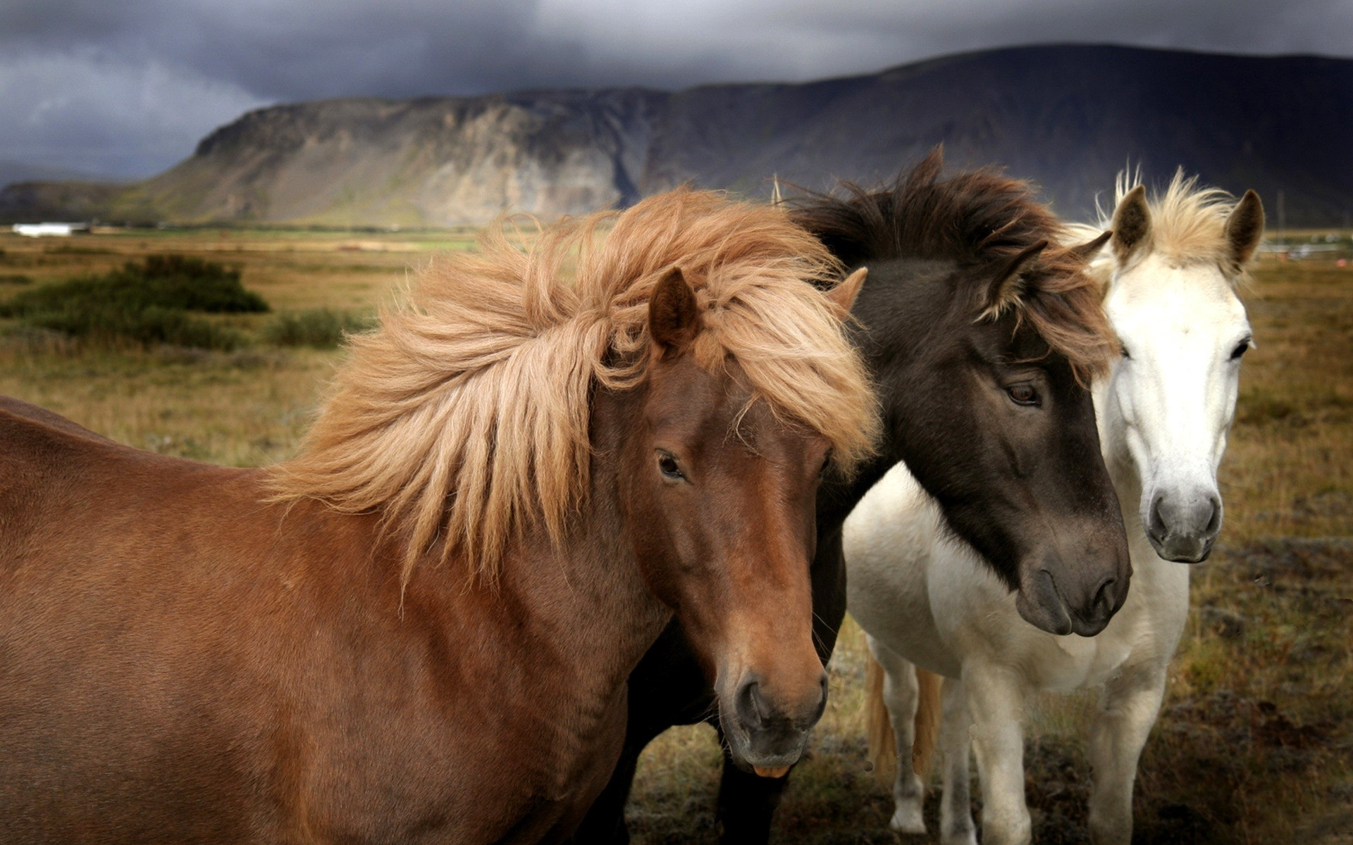 Animals Horses HD Wallpaper