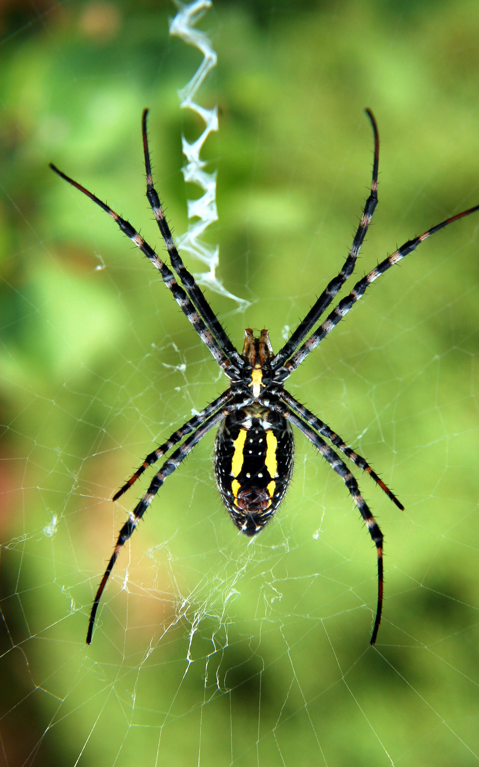 Animals insects spiders arachnids HD Wallpaper