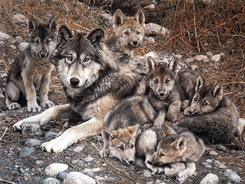 Animals low resolution Wolves HD Wallpaper