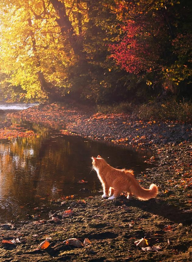 Animals orange leaves ponds HD Wallpaper