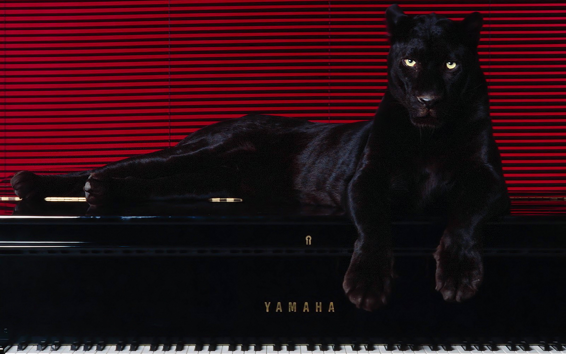 Animals panthers