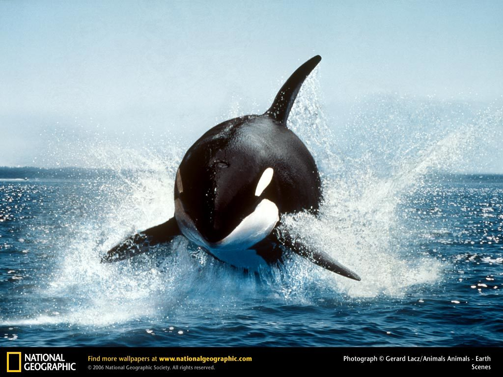 Animals wildlife national geographic HD Wallpaper