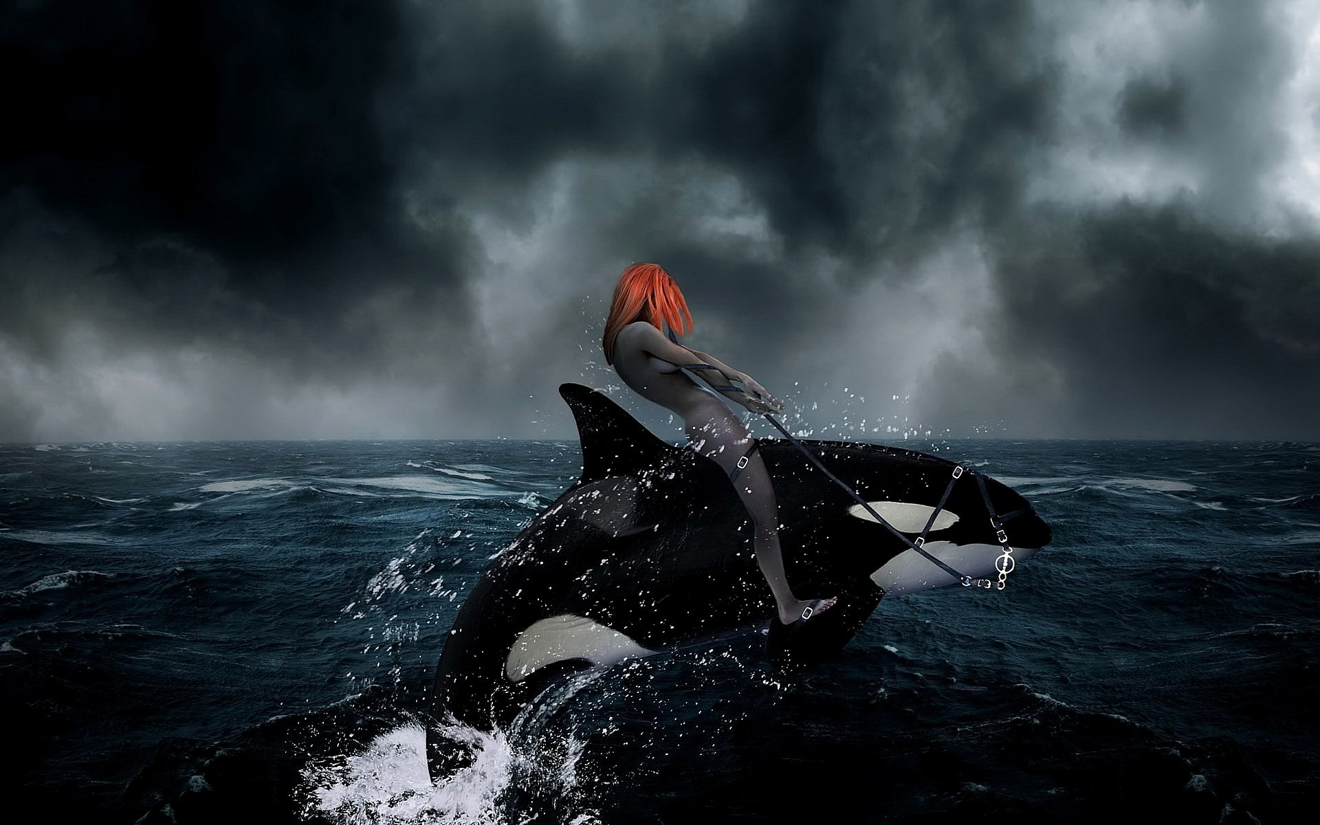 artwork killer whales 3d