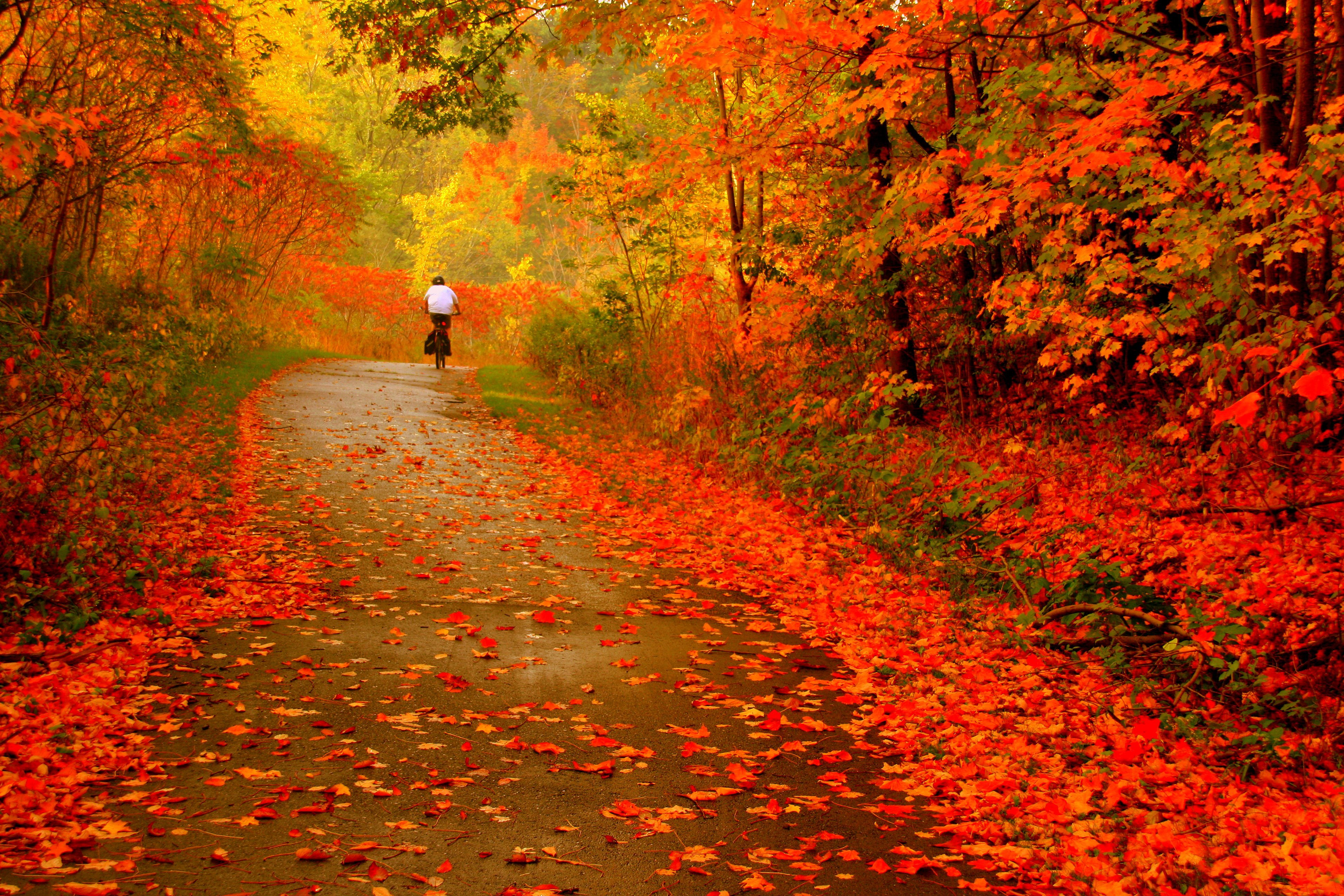 autumn forests leaves paths HD Wallpaper