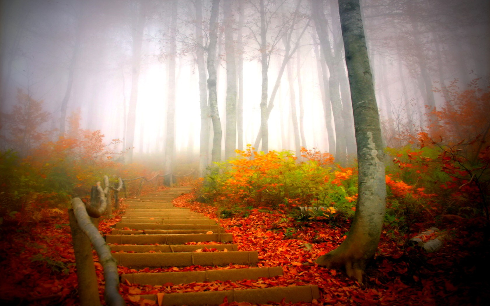 autumn forests paths mist HD Wallpaper