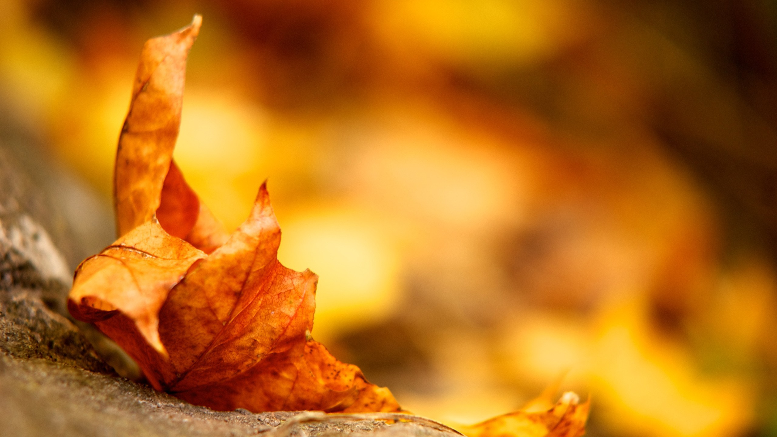autumn leaves fallen leaves HD Wallpaper