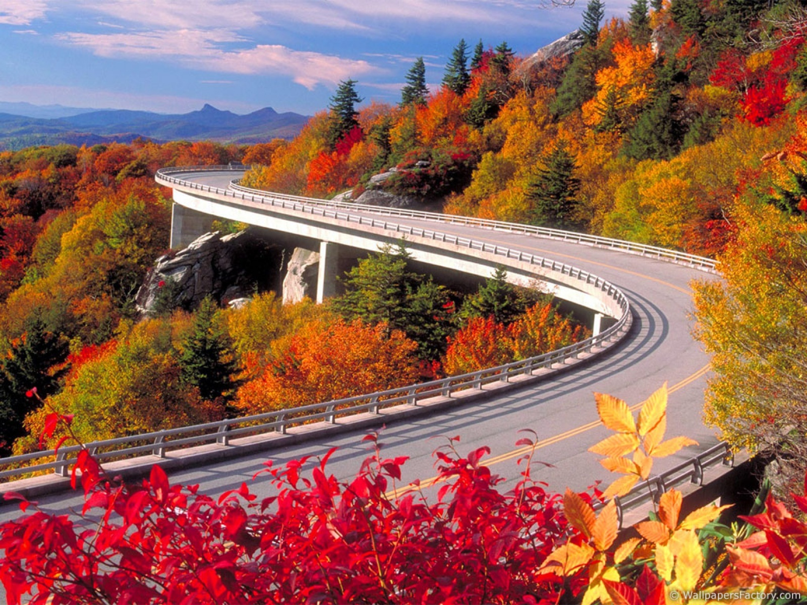 autumn leaves Highways roads HD Wallpaper