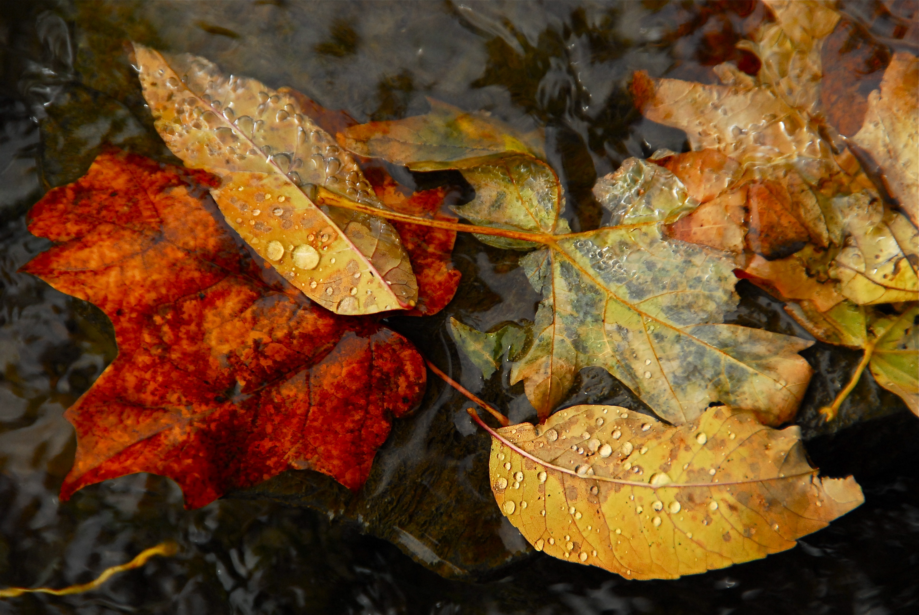 autumn leaves ponds rivers HD Wallpaper