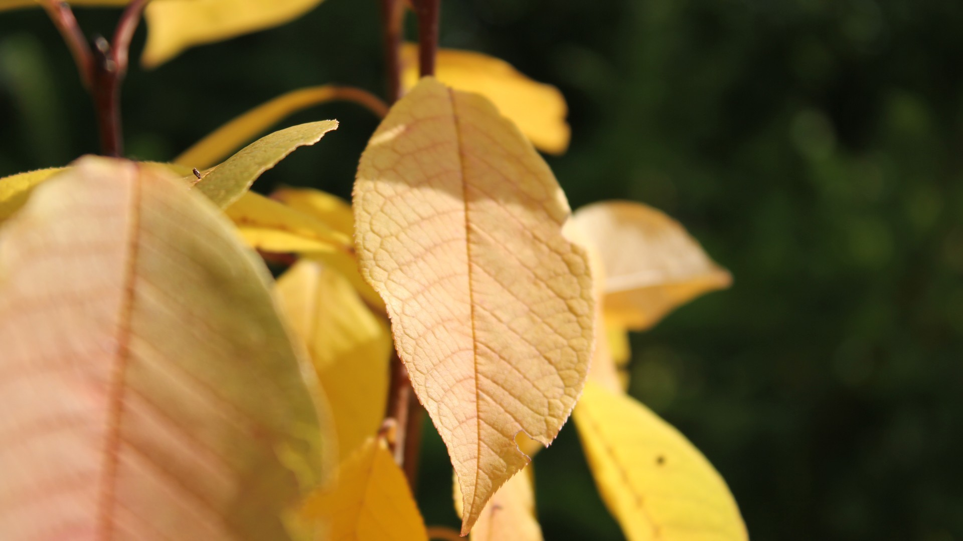 autumn multicolor yellow leaves