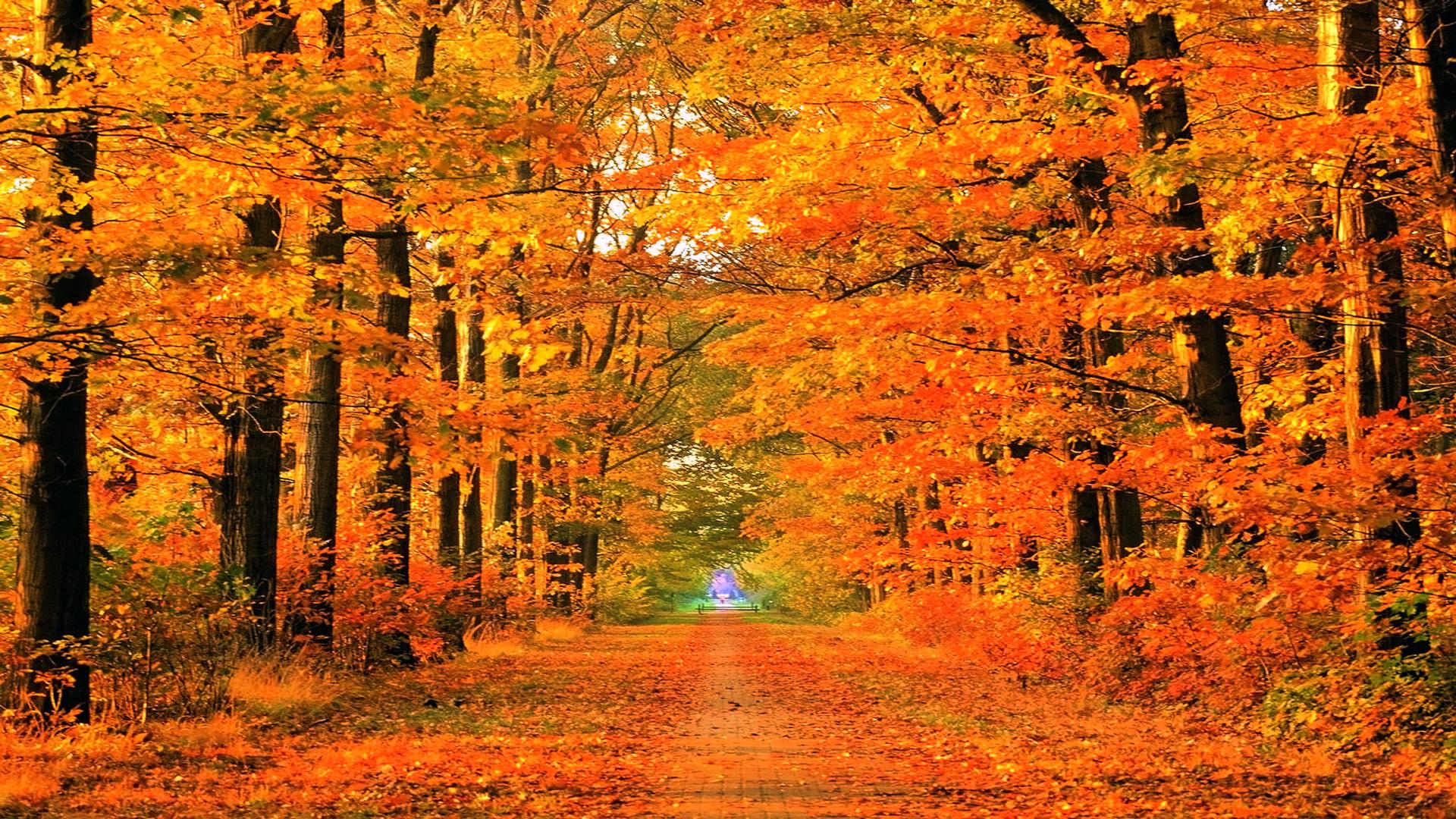 Autumn Wallpaper on Autumn Season Roads Parks Hd Wallpaper   General   777745