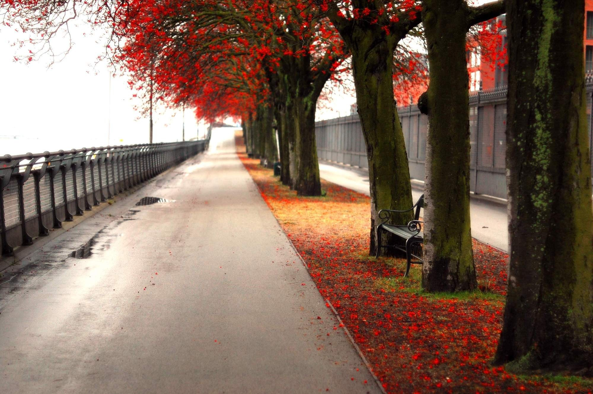autumn ubuntu alley HD Wallpaper
