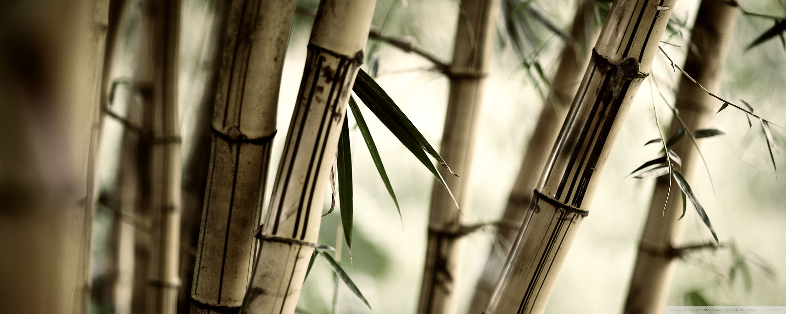 bamboo HD Wallpaper