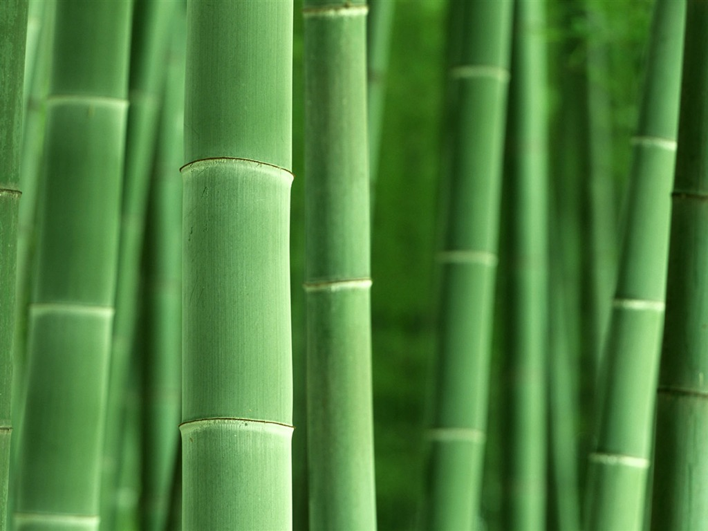 bamboo blade bamboo HD Wallpaper