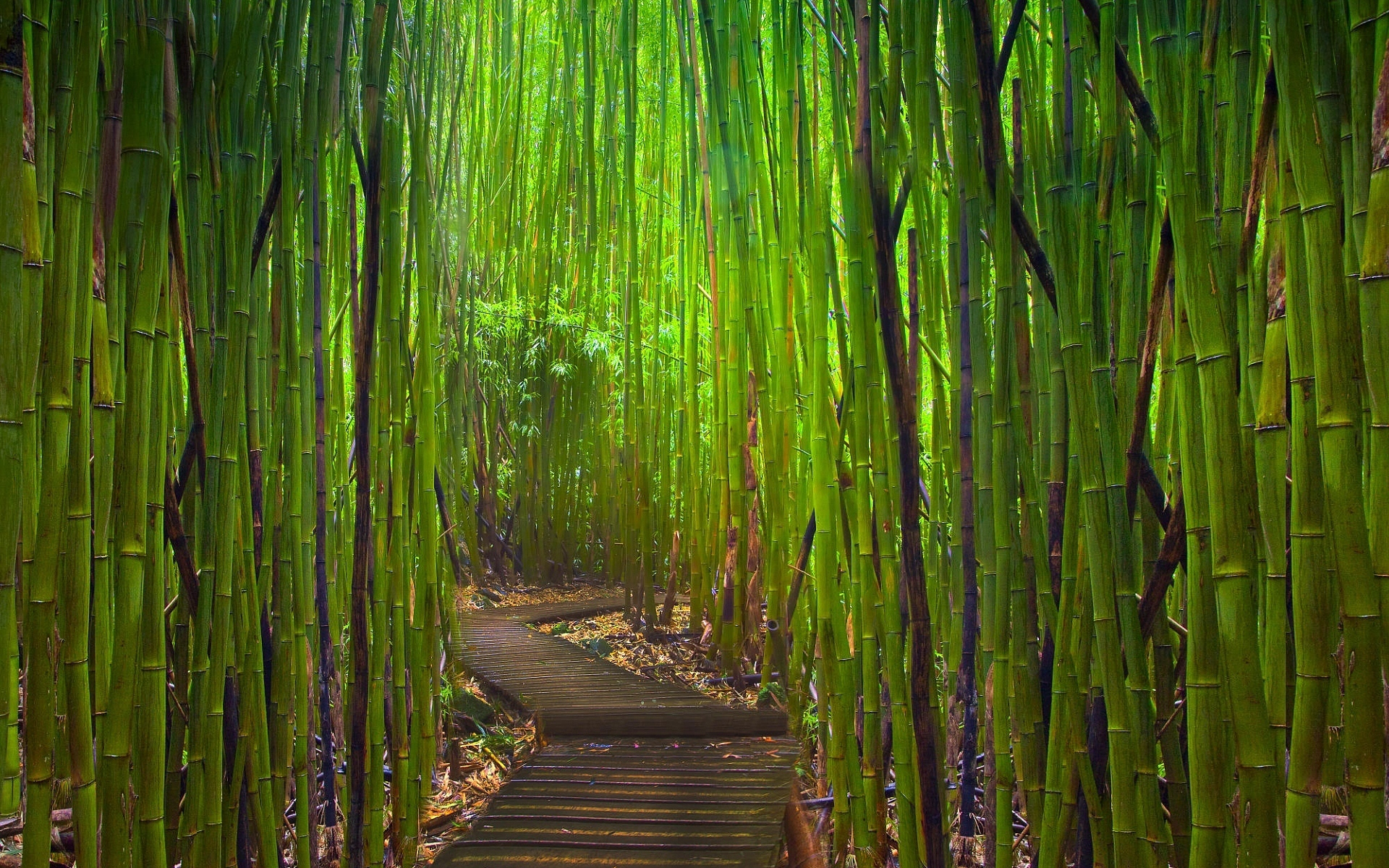 bamboo paths trail Asia HD Wallpaper