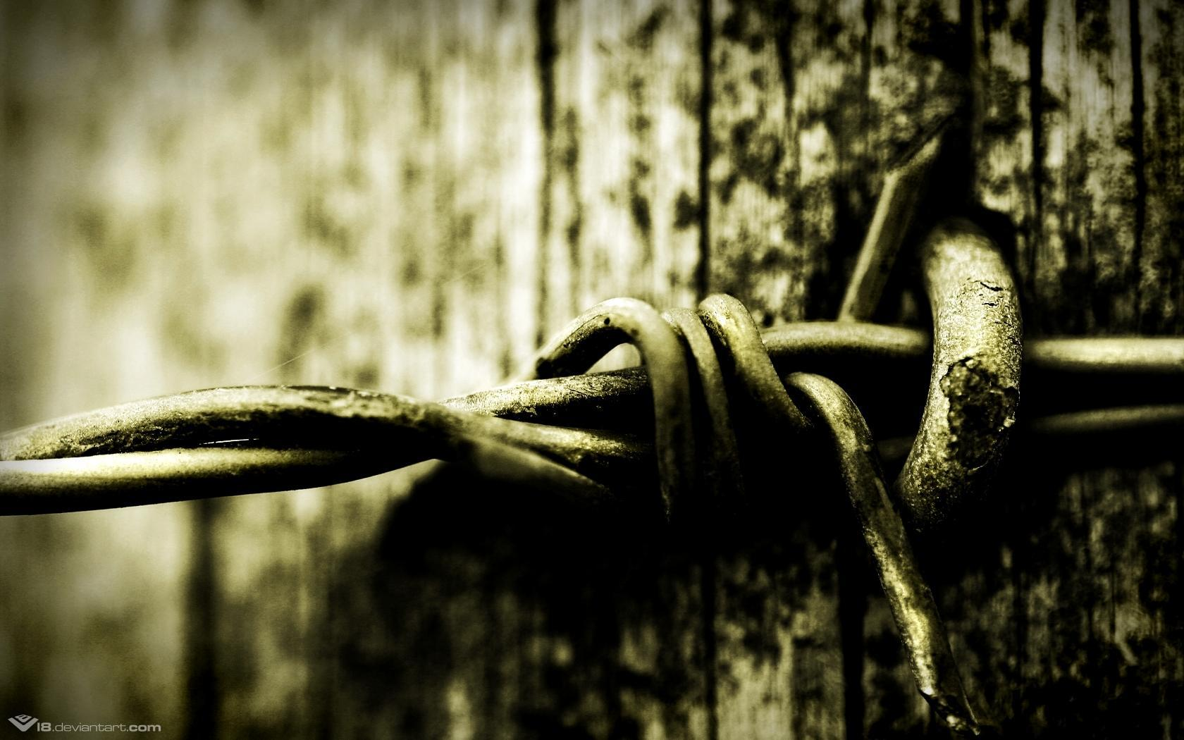 barbed wire HD Wallpaper