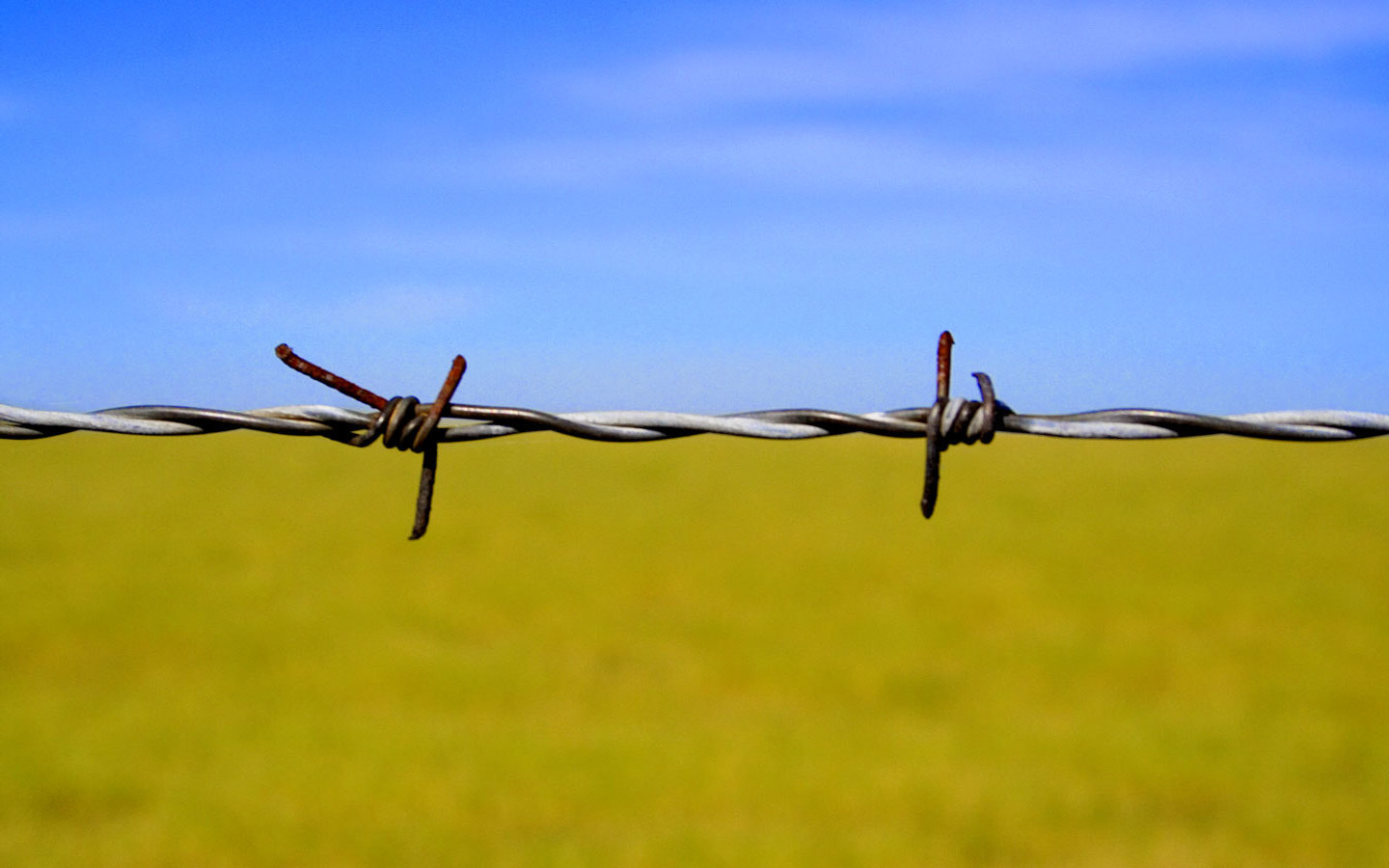 barbed wire abstract HD Wallpaper