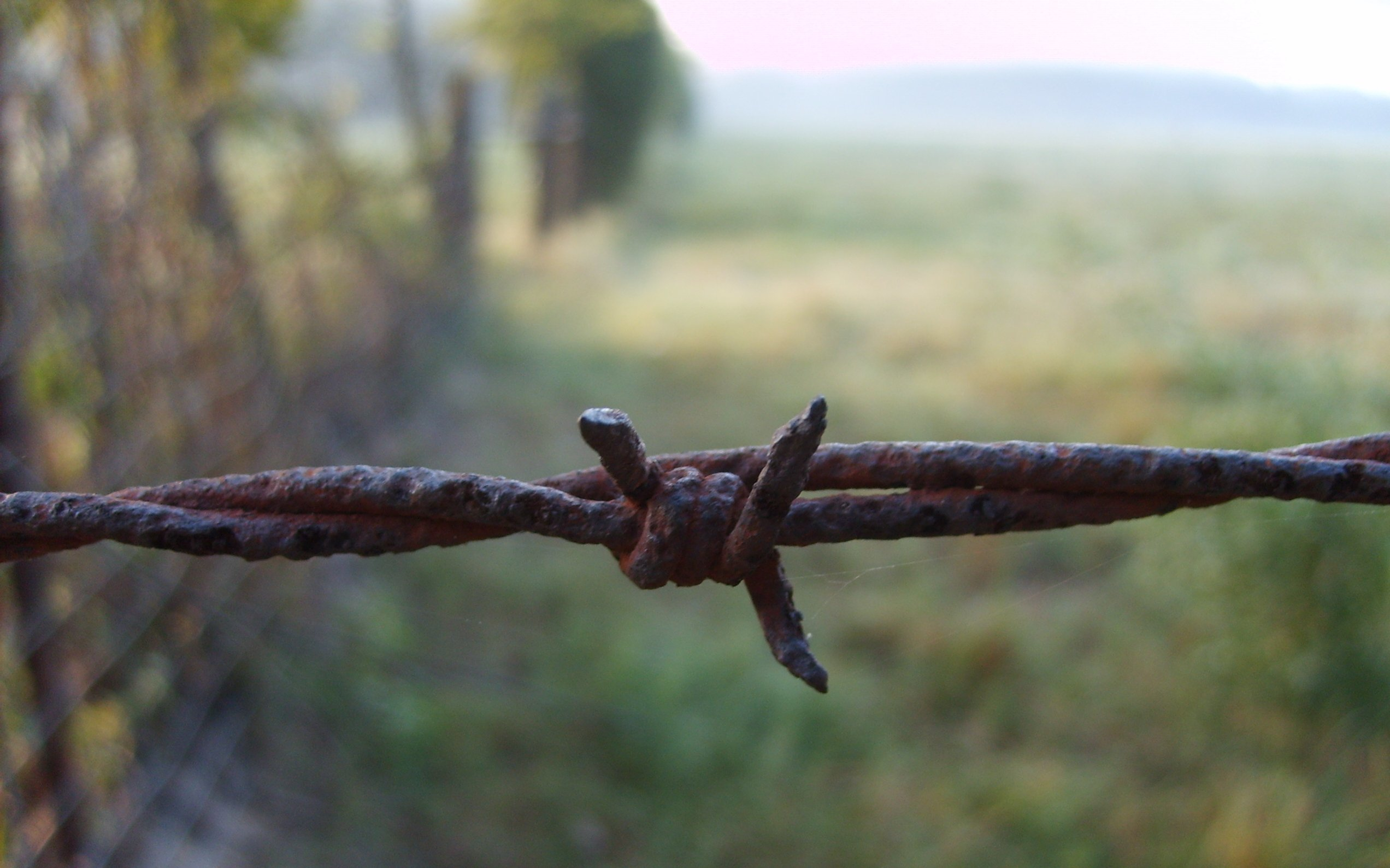 barbed wire barbedwire HD Wallpaper