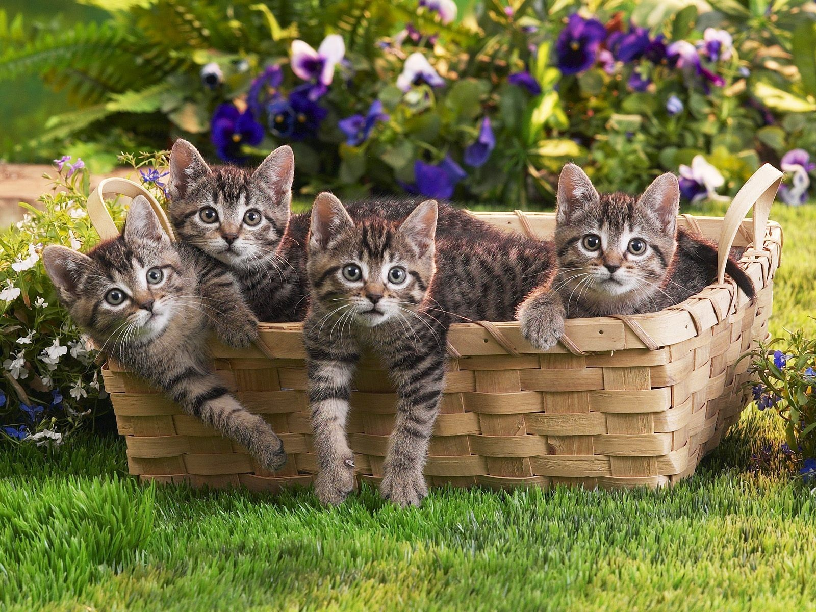 baskets cats Animals