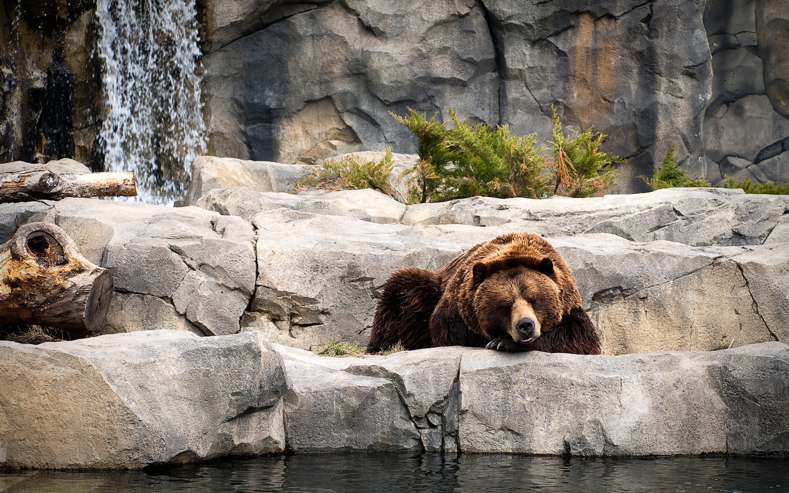 Bears Animals zoo sleep HD Wallpaper