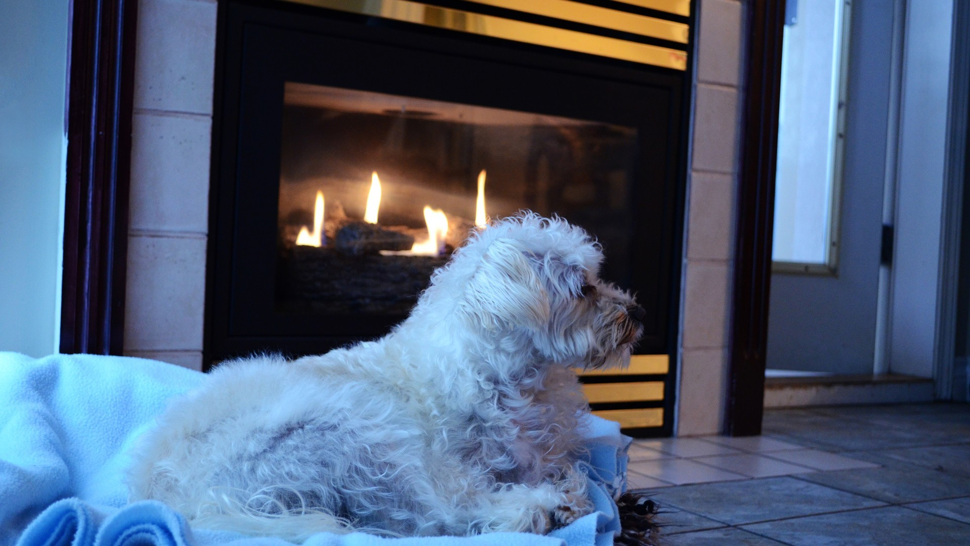 beds Dogs homes fireplaces HD Wallpaper