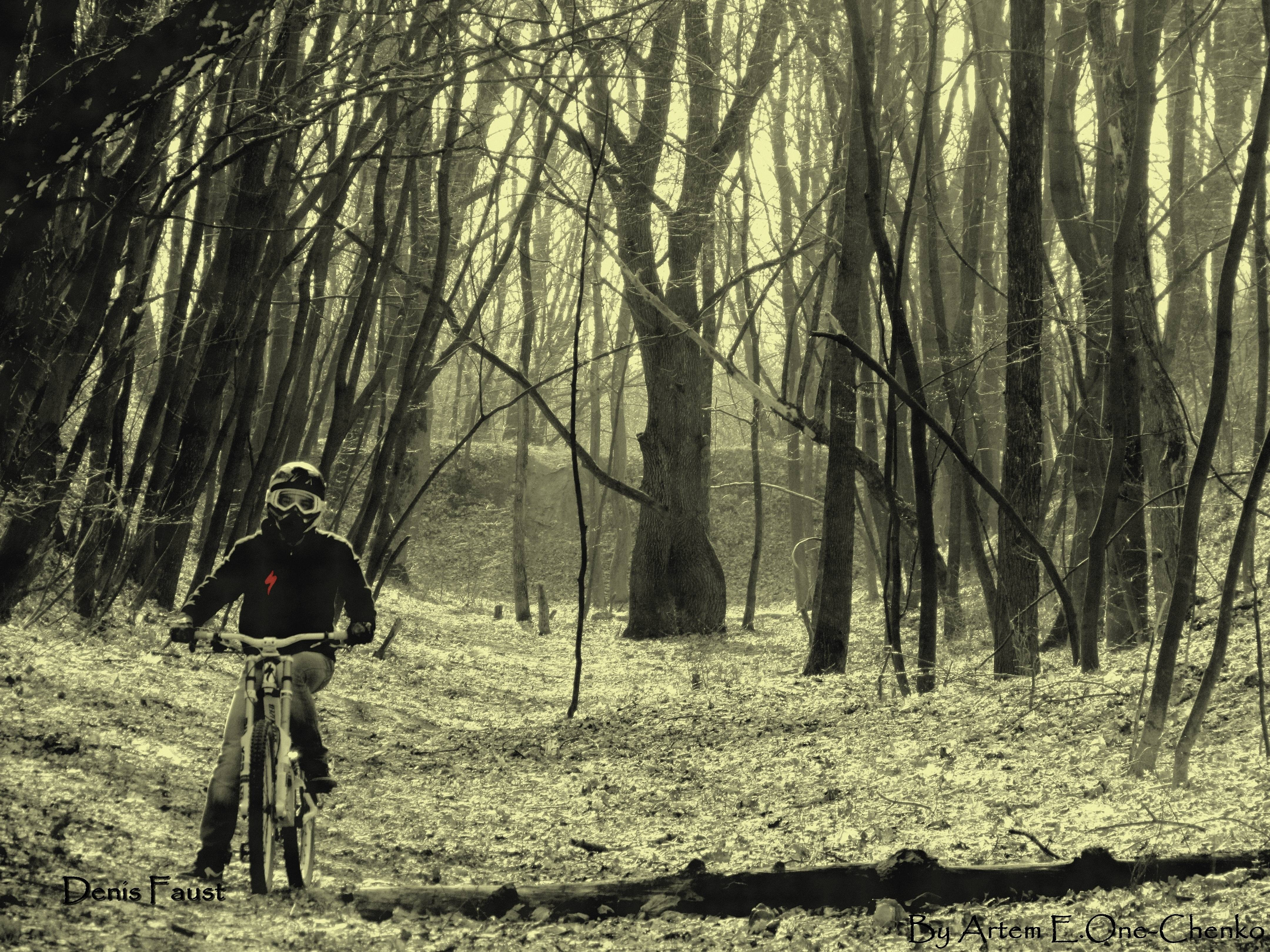 bike autumn forests Bicycles HD Wallpaper