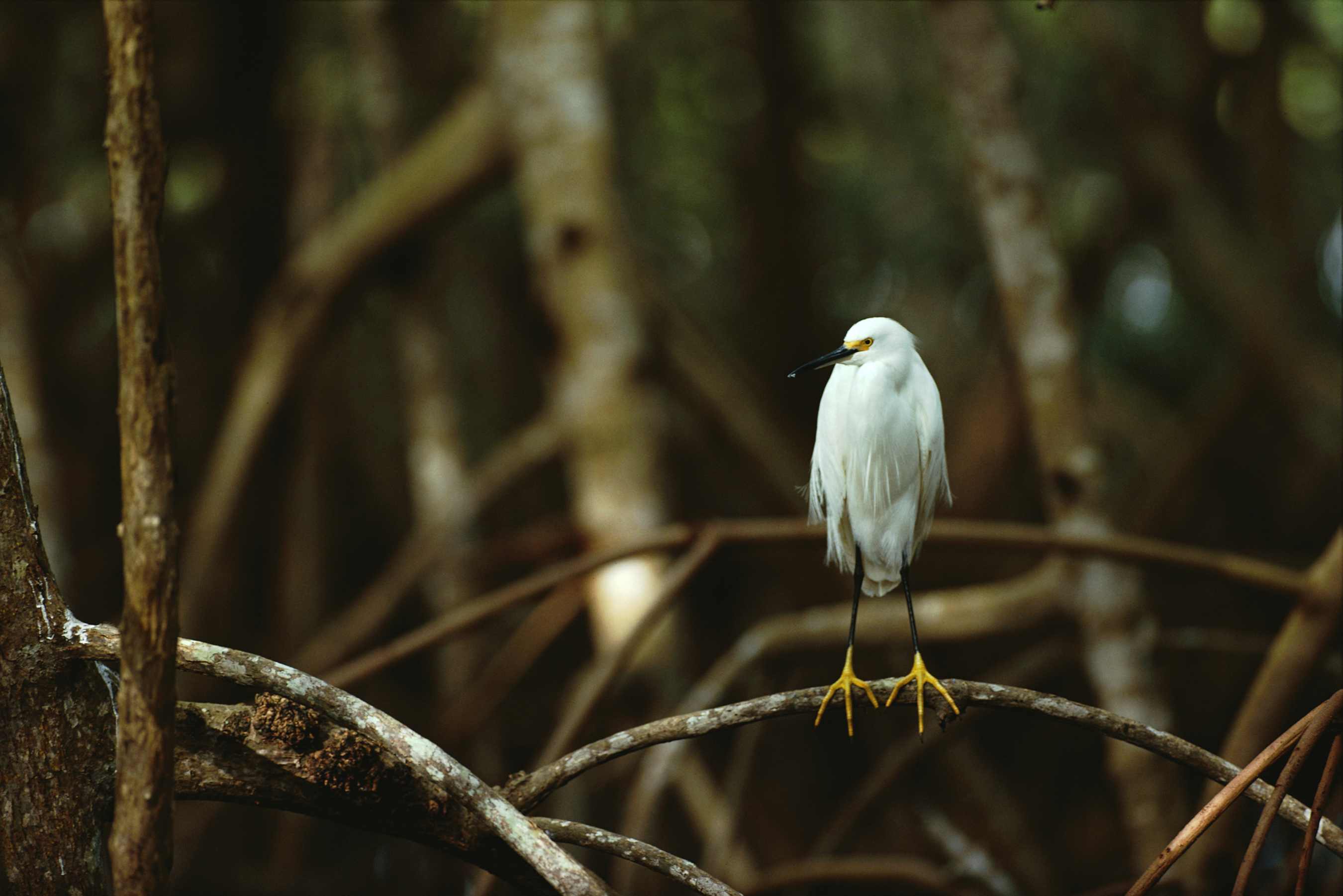 Birds Florida national park HD Wallpaper