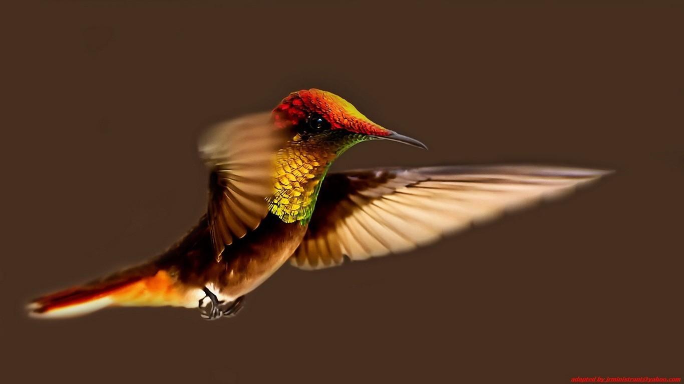 "\""Birds"