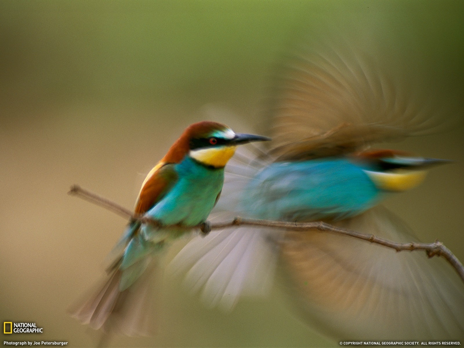 Birds national geographic motion HD Wallpaper