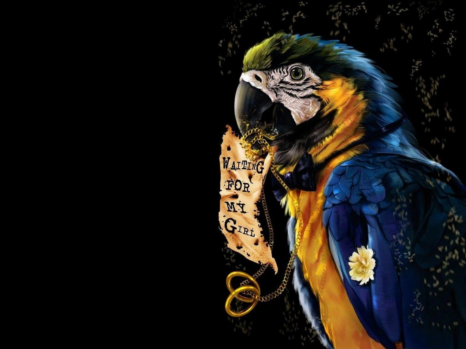 Birds Parrots Animals HD Wallpaper