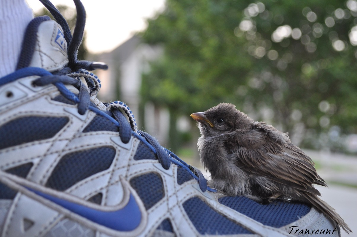 Birds Shoes sparrow sneakers HD Wallpaper