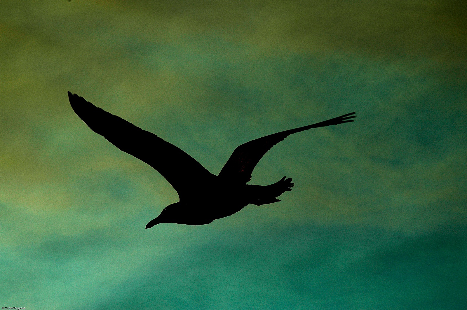 Birds silhouette HD Wallpaper
