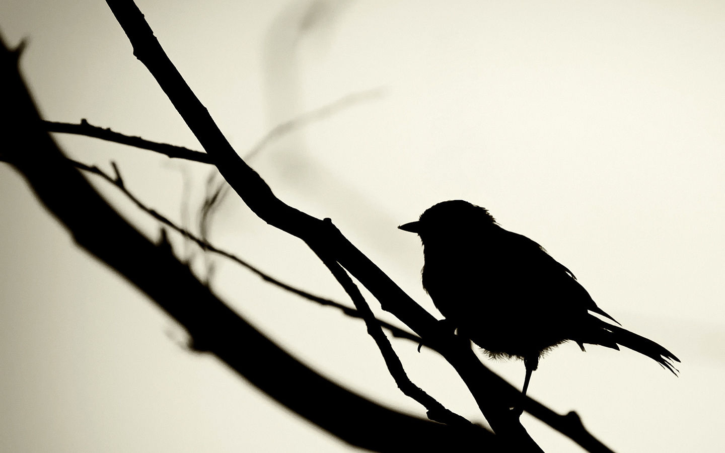 Birds silhouettes grayscale branches