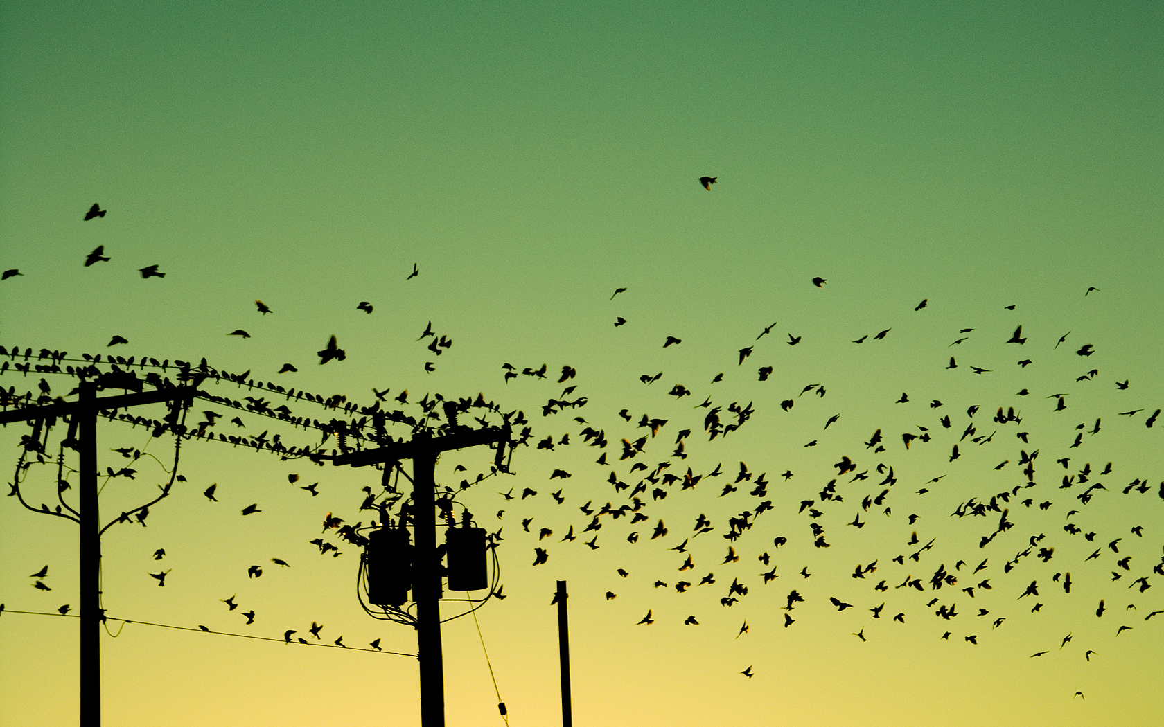 Birds silhouettes power lines HD Wallpaper